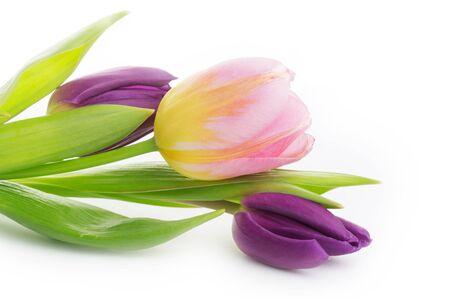 Photo pour tulips bouquet isolated on white background - image libre de droit
