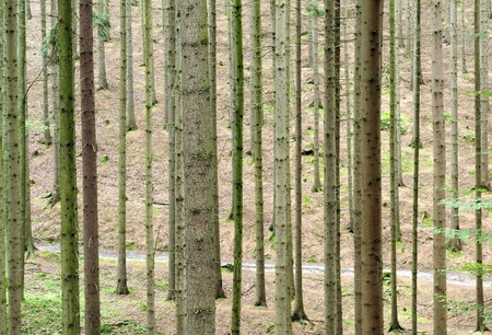 Look at the trunks of trees in the forest