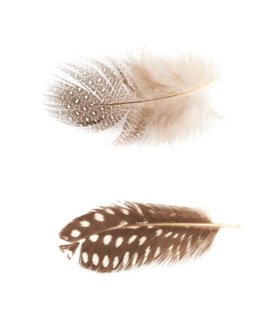 Decorational feather isolated