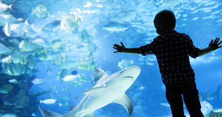 Photo for Kid watching the shoal of fish swimming in oceanarium - Royalty Free Image