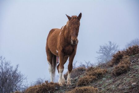 Foto de Horse with an excited penis. Looks at you steadfastly. Looking at you with lust. Crimea - Imagen libre de derechos