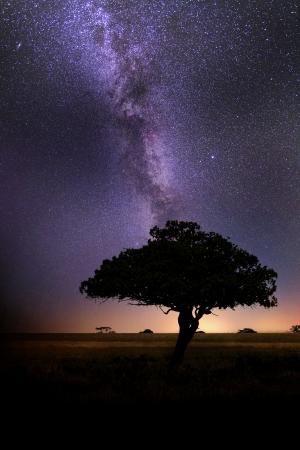Milky Way in African Savanna