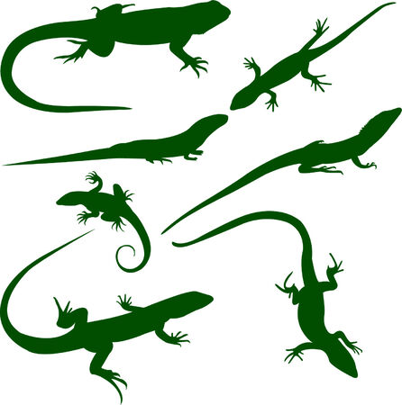 lizards collection - vector