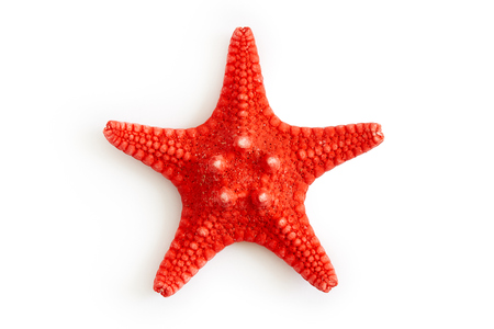 Foto de Dried red sea starfish isolated on white background. Top view - Imagen libre de derechos
