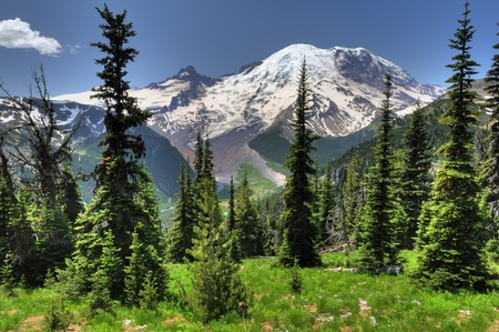 Beautiful portrait of Mt Rainier from Sunrise point with lush green meadows and conical pine trees