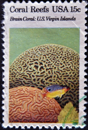 USA - CIRCA 1980 : A stamp printed in the USA shows Coral Reefs, Brain coral, u.s. virgin islands, circa 1980