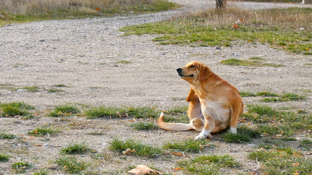 Photo pour stray dog try to scratching its fur . - image libre de droit