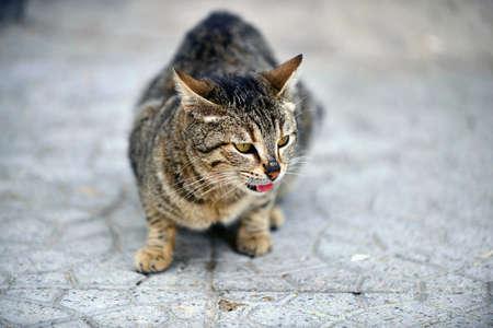 Photo pour Stray cat,on the street pavement image - image libre de droit