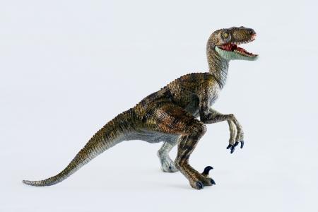 A Velociraptor Dinosaur Stands Against a White Background