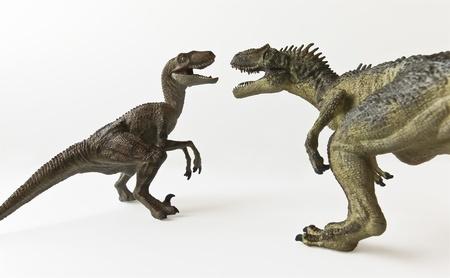 A Velociraptor and Allosaurus Battle Against a White Background