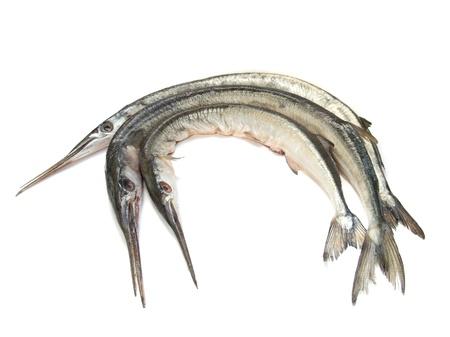 Garfish (Belone belone) raw, isolated over white
