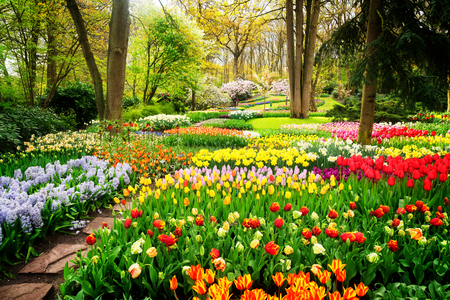 Photo pour Colourful Tulips Flowerbeds and Path in an Spring Formal Garden, retro toned - image libre de droit