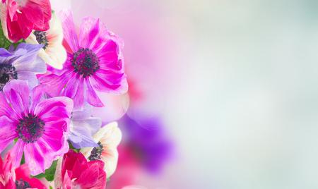fresh anemone flowers on blue background banner