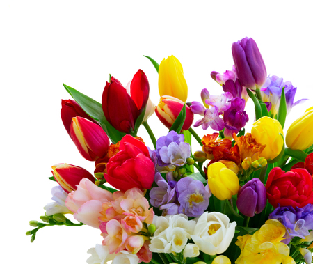Photo for Bouquet of tulips and freesias close up isolated on white background - Royalty Free Image