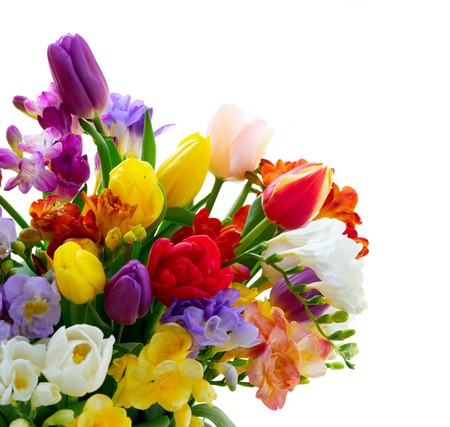Photo for Bouquet of fresh tulips and freesias close up isolated on white background - Royalty Free Image