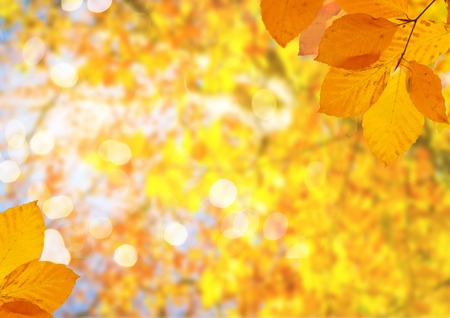 Photo for Fresh yellow maple fall tree foliage on pale blue sky background - Royalty Free Image