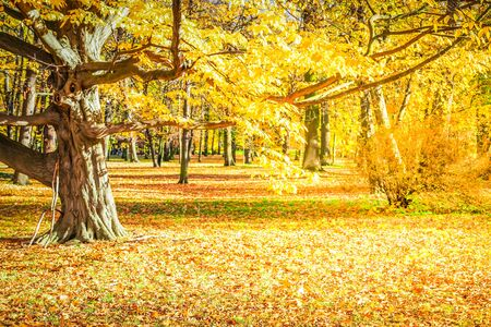 Photo pour fall forest landscape with yellow trees and fallen leaves on the ground, fall seasonal background, retro toned - image libre de droit