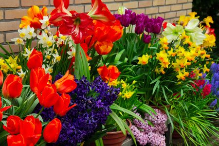 Photo for variety of spring flowers in pots on display in shop - Royalty Free Image