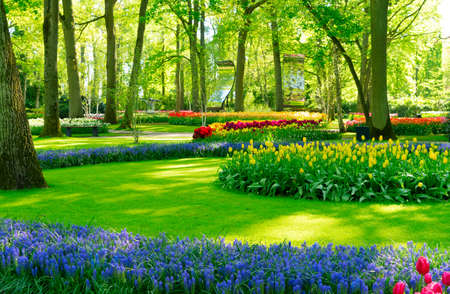 Photo for bright spring lawn with blooming blue flowers and green grass in formal garden - Royalty Free Image