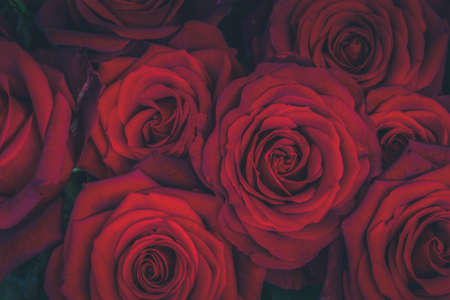 Photo pour bouquet of dark red luxury blooming roses close up, toned - image libre de droit