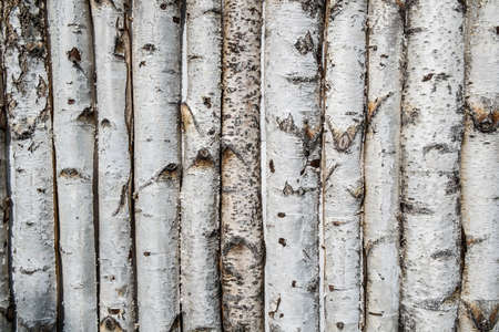 Birch wooden background