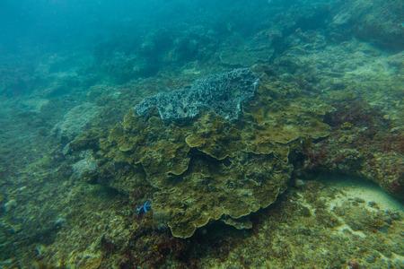 Photo pour Underwater world in an ocean - image libre de droit