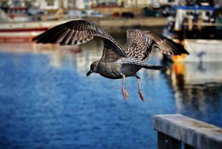 Photo pour Ocean Bird ready to catch fish - image libre de droit
