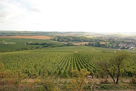 Hills of vineyards of Chablis, region of Auxerre (Burgundy, France)