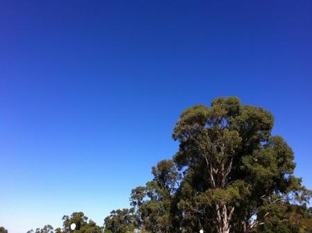 Bluey day in Australia