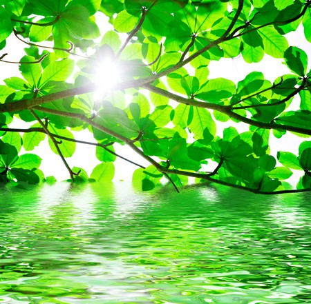 Abstract background of backlit green leaves with water reflections