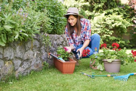 Photo pour Cute Caucasian brunette with hat on head and in working clothes crouchig and pruning flowers while crouching in backyard. - image libre de droit