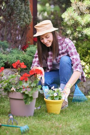 Photo for Caucasian female gardener in working clothes and with gardening gloves planting begonia while crouching. Backyard exterior. - Royalty Free Image