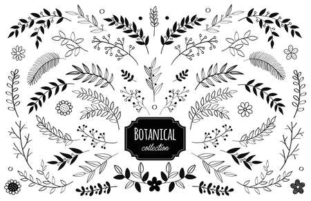 Illustration pour vector floral elements. Branches and leaves. Herbs and plants collection. Vintage botanical illustrations and floral wreaths. - image libre de droit
