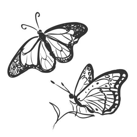doodle butterfly isolated on white, excellent vector illustration, EPS 10