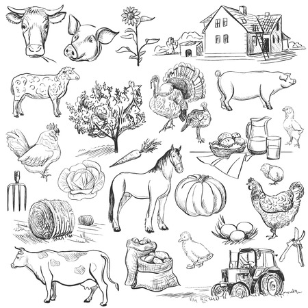 Farm collection - hand drawn set with cow, goat, pig, chicken, rooster, horse, turkey, tractor, rakes, sunflowers, cabbage, carrots, eggs, milk, haystackのイラスト素材