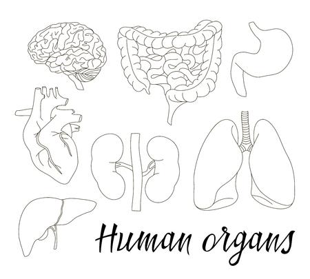 Diagram Of Uteru And Stomach