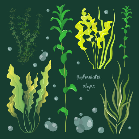 Illustration pour Vector set of underwater green sea seaweeds, algae. Vector illustration, EPS 10 - image libre de droit