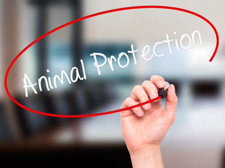 Man Hand writing Animal Protection with black marker on visual screen. Isolated on office. Business, technology, internet concept. Stock Photo