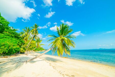 Photo pour Beautiful sunny beach. View of nice tropical beach with palms around. Holiday and Vacation concept - image libre de droit