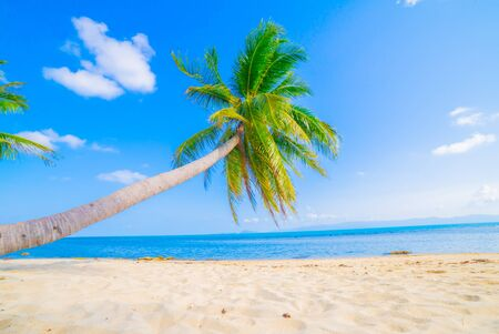 Photo pour Beautiful beach. View of nice tropical beach with palms around. Holiday and vacation concept. Tropical beach. - image libre de droit