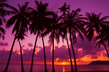 Palm trees silhouette at sun