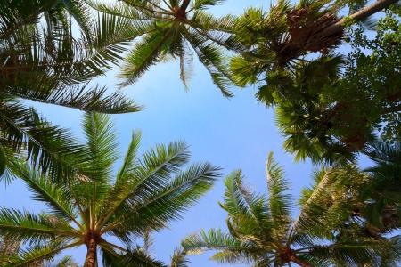 Palm Trees Over Blue Sky