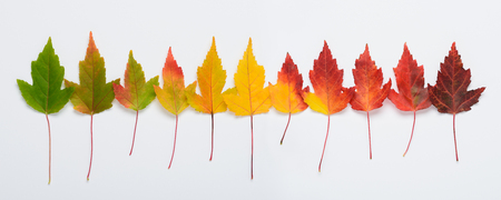 Foto de Autumn leaves rainbow gradient transition long horizontal banner top view - Imagen libre de derechos