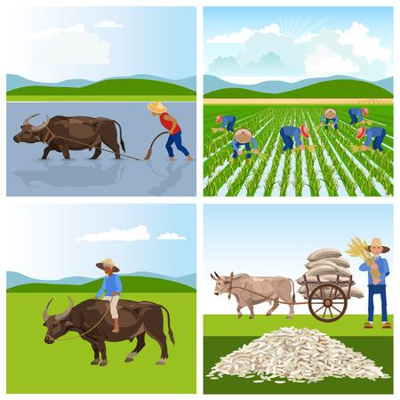 Illustration pour A Farmers work in rice fields. .illustrations for infographics - image libre de droit