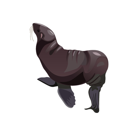 Fur seal. Vector illustration isolated on white background