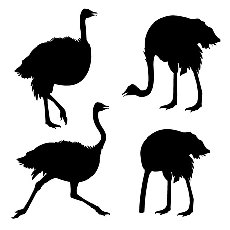 Ilustración de Set of ostrich silhouettes . Vector illustration isolated on the white background - Imagen libre de derechos