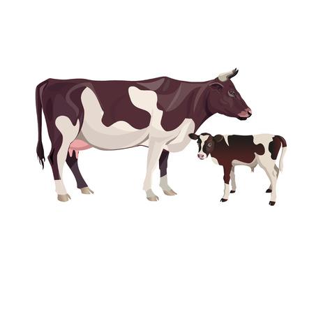 Ilustración de Cow mother with baby calf. Vector illustration isolated on white background - Imagen libre de derechos