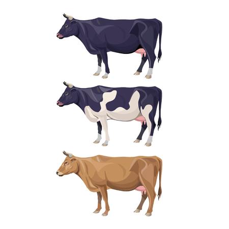 Ilustración de Different cows colors set - Imagen libre de derechos