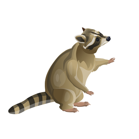 Illustration pour Raccoon standing on hind legs. Vector illustration isolated on white background - image libre de droit
