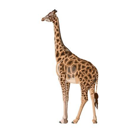 Giraffe isolated on white background. Vector illustration